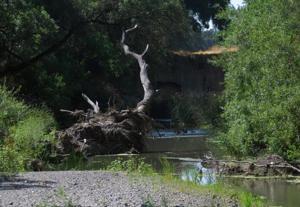 Verona Streambank Restoration 8-16-12 029