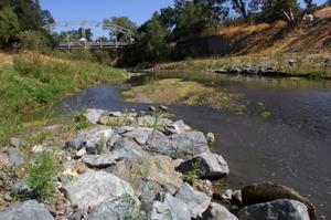 Verona Streambank Restoration 8-16-12 109