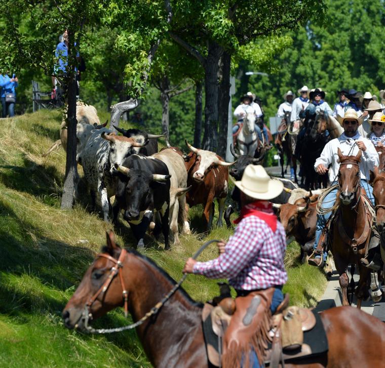 Last CattleDrive 06-14-19 444