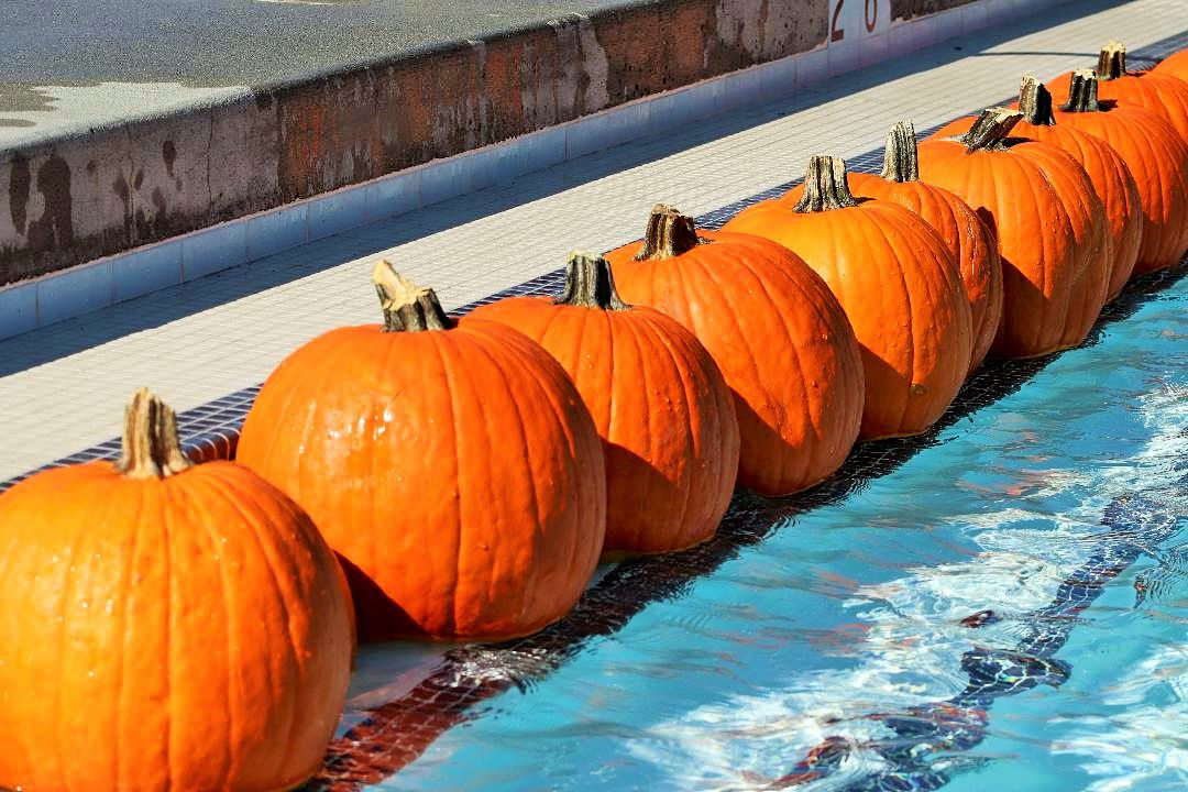 Floating Pumpkin Patch