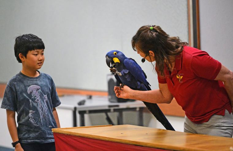Happy Birds 03-30-19 493