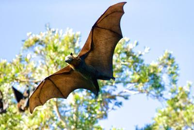 Bat Mortality james wainscoat Unsplash.jpg