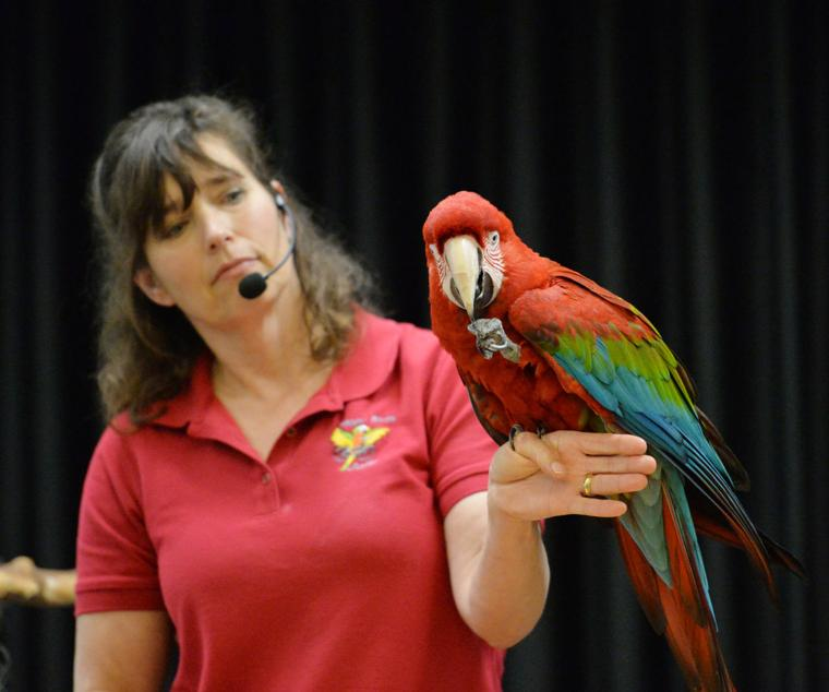 Happy Birds 03-30-19 759