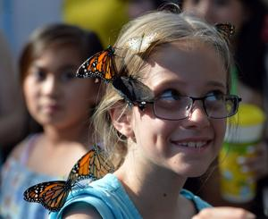 Paula Hazell of Pleasanton attracted several colorful flying insects at the SkyRivers Butterfly Exhibit at the Alameda County Fair. (Photos – Doug Jorgensen)
