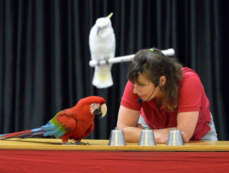 Happy Birds 03-30-19 665