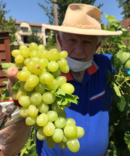 (8) SRC - Corrie With Grapes.jpg