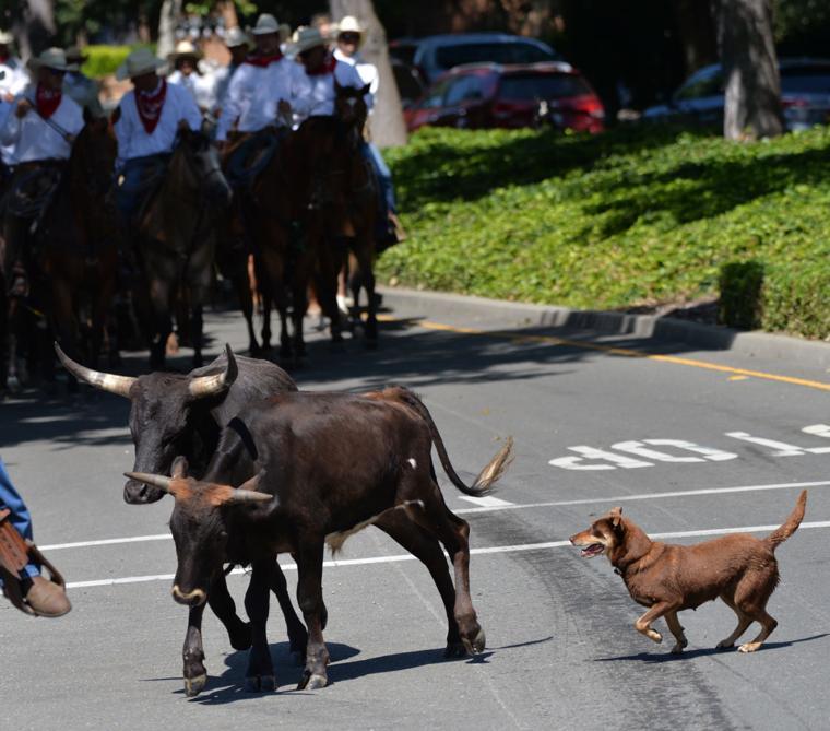 Last CattleDrive 06-14-19 395