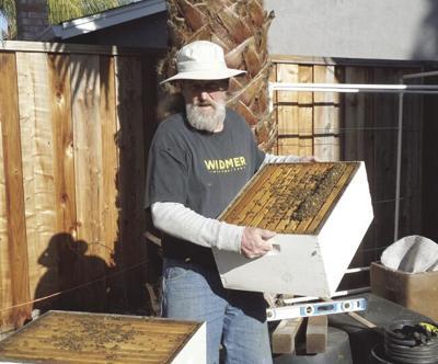 LIV - Beekeeping - Schumacher.tif
