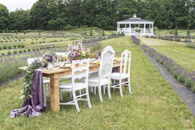 200924ind lavender