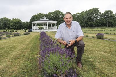 200709ind lavender03