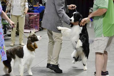 190801ind DogShow