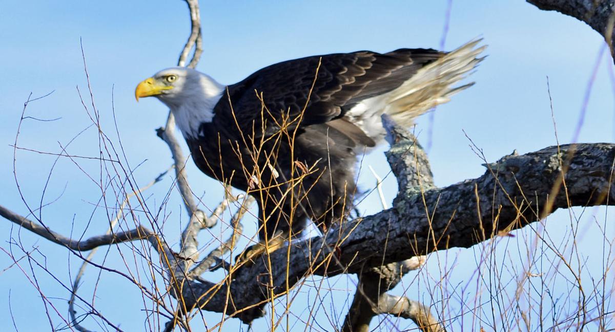 160121a-l eagle