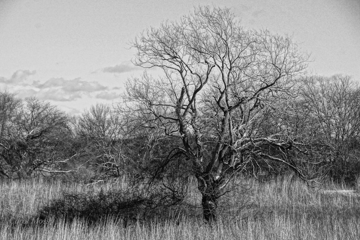 180118a-l trustsom pond winter tree BW.jpg
