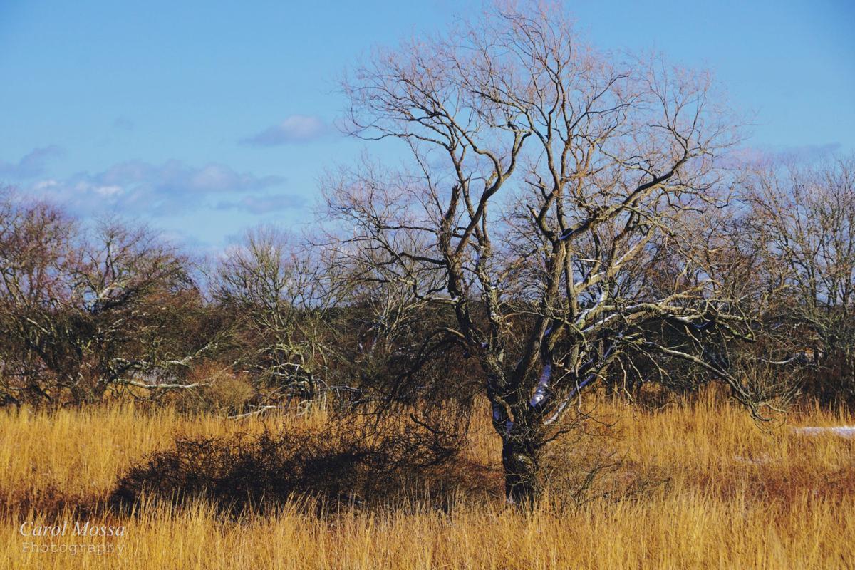 180118a-l trustsom pond winter tree GOLDEN.jpg