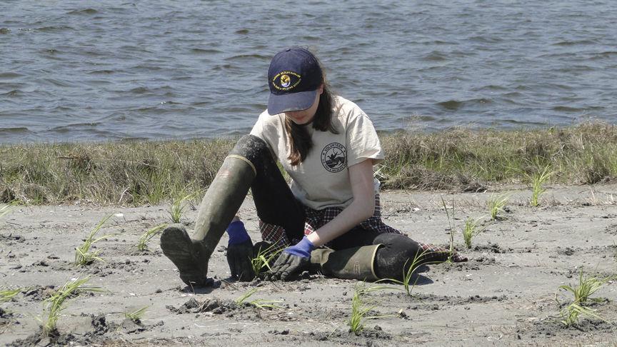 180701scl marsh planting 2