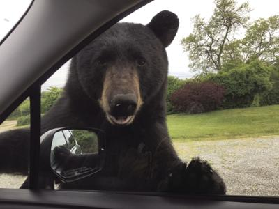 190530ind Bear