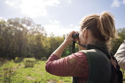 200601scl BirdWatching