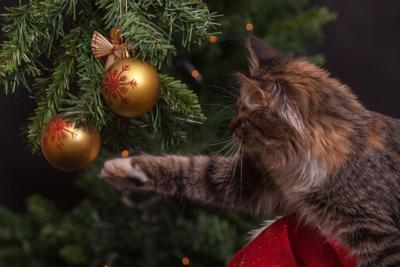 pixabay cat kitten christmas tree holiday