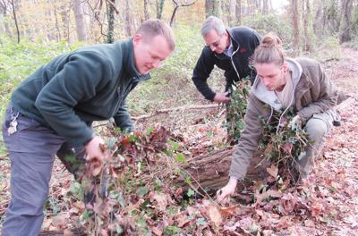 Park officials battle invasives at Upton Hill