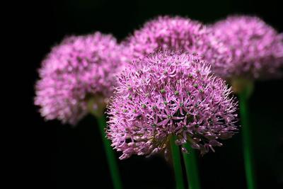 flowers garden pixabay