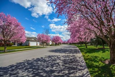 Neighborhood Spring Flowering Trees Pixabay