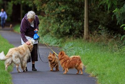 Senior Dog Walking Exercise Pixabay