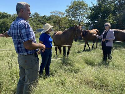 Spanberger visits Culpeper horse farm
