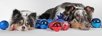 Dogs Christmas Holiday Pixabay