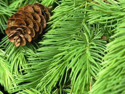 generic christmas tree