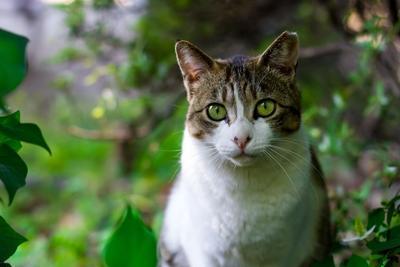 Cat Outside Pixabay