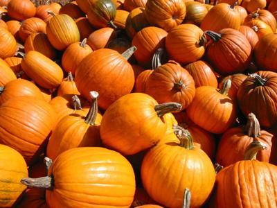 generic pumpkins halloween