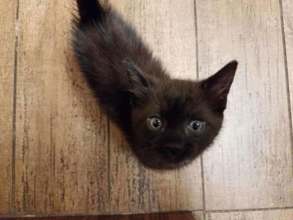 Kitten saved from drain