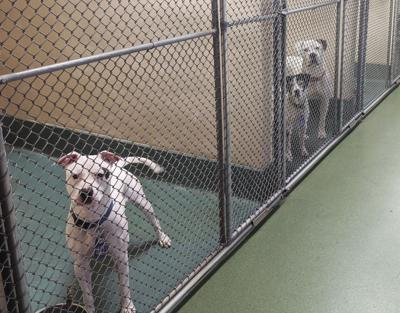 County moving ahead with new animal shelter