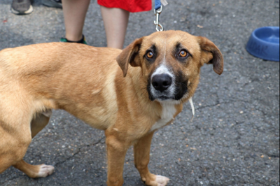 Arlington animal rescue group welcomes dogs from South