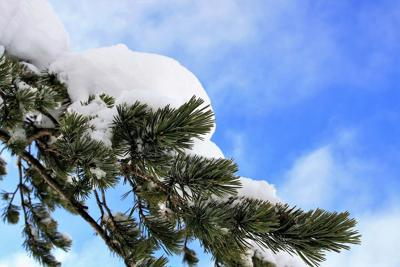 Winter Weather Snow Tree Limb Pixabay