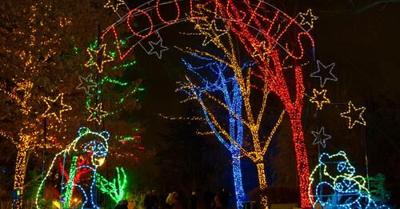 zoolights.jpg