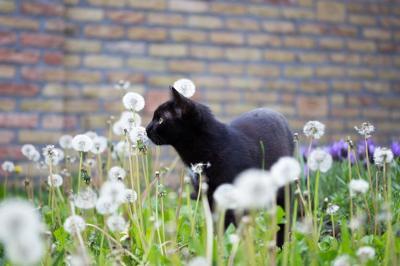 Black Cat Pixabay