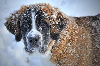 DOG SNOW COLD PIXABAY