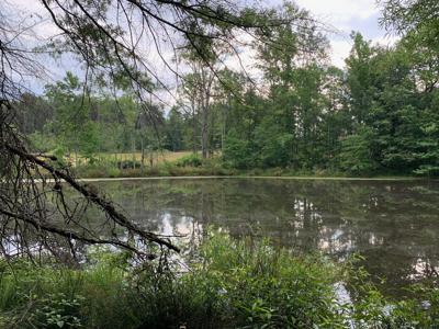 Stillwater pond Stafford County