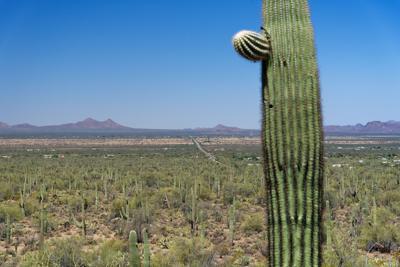 avra valley cactus.jpg