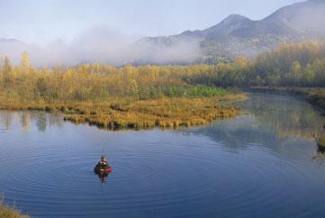 Game fish offering arizona residents lifetime licenses for Fishing license az