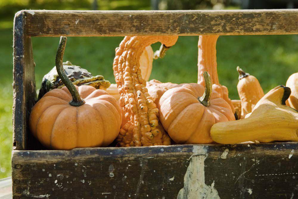 Q4 Mon Eats Gourds1