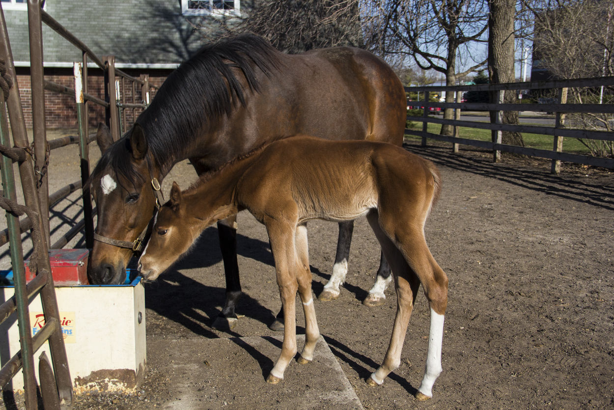 Isu Students Have Opportunity To Learn About Care For Baby Horses At Horse Farm Student Life Iowastatedaily Com