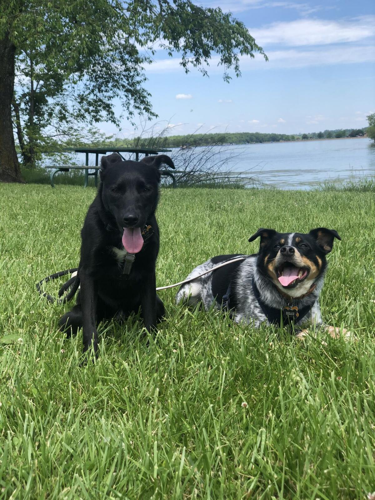 GW dogs Rby and Beau