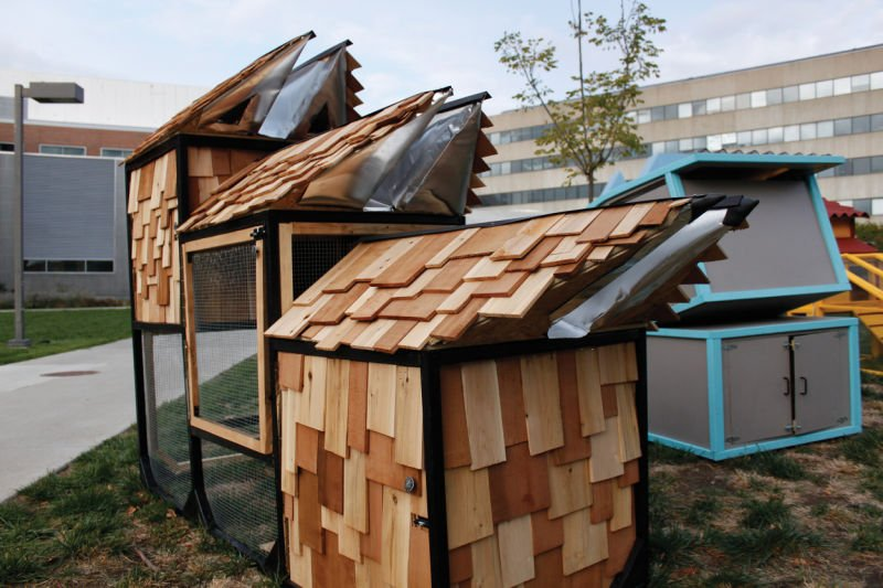 Design Students Get Creative With Chicken Coop Projects News