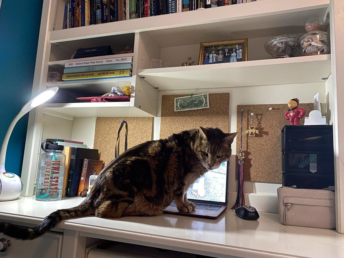 Peyton's workspace with cat.jpg