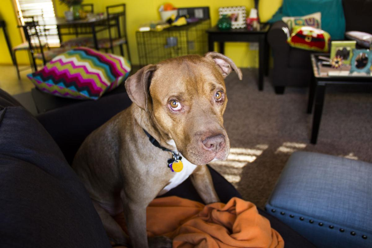 81858df6e Snyder: Breed-specific laws cause injustice | Columnists ...