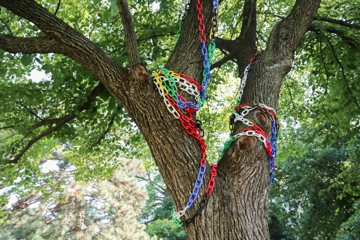 iowa state tree of oppression garners mixed reactions news