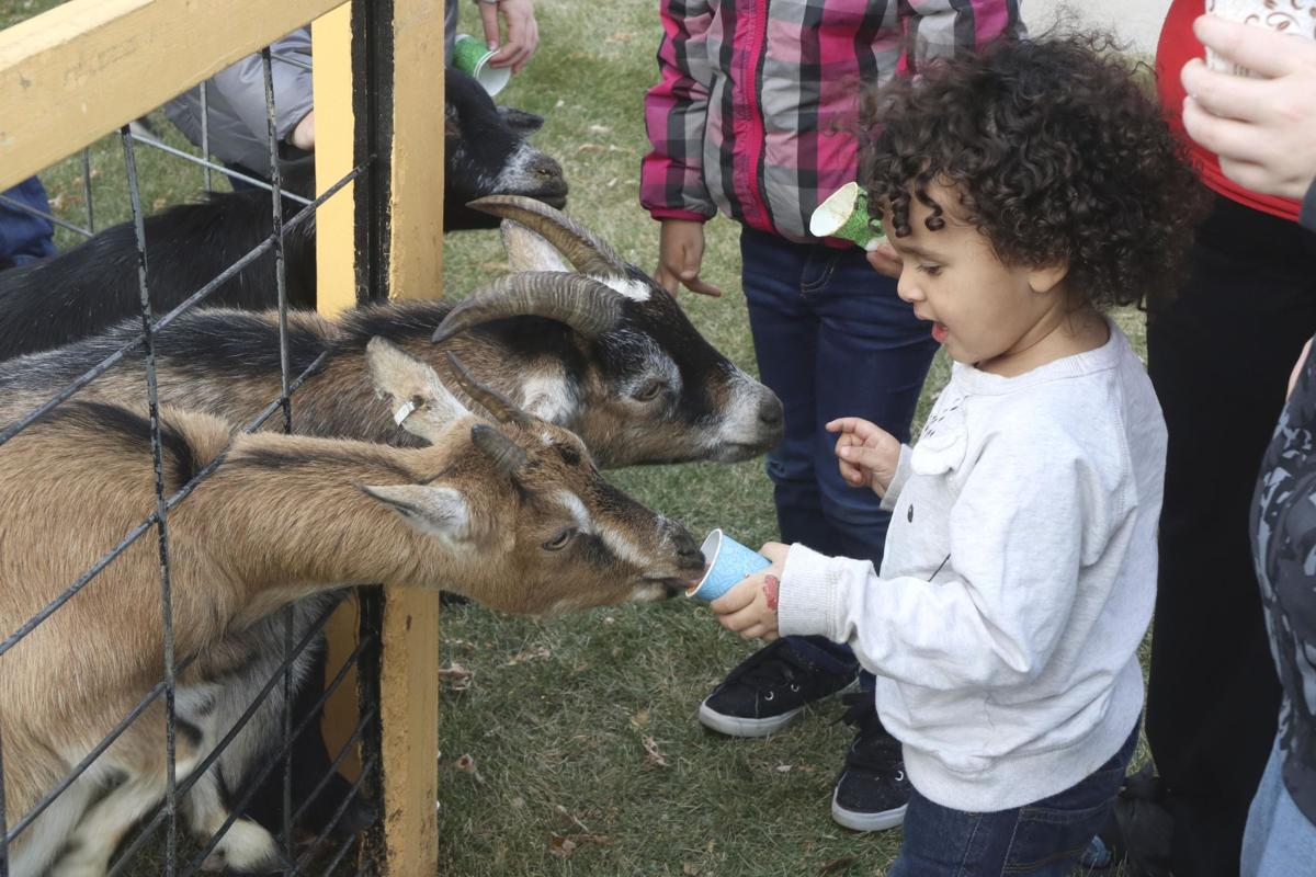 Hundreds flock to inaugural 'Fall Fest'