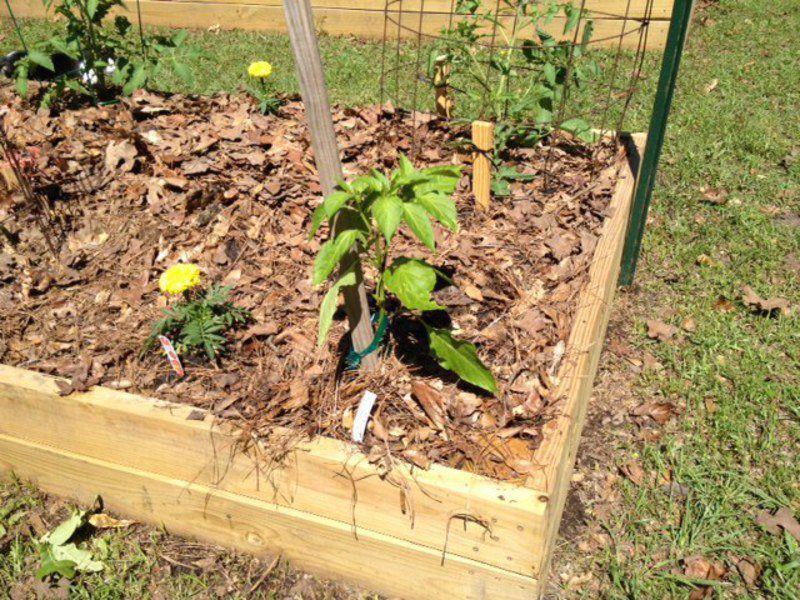 Weed Control In Your Vegetable Garden